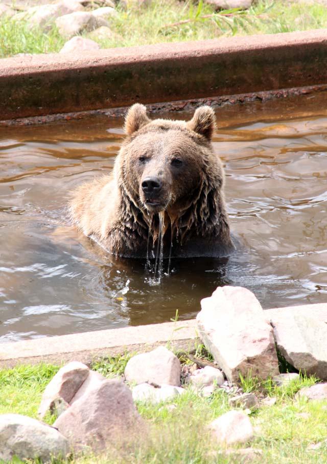 Björnbad